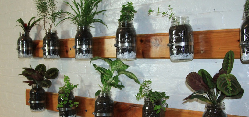 Diy mason jar herb garden idea bedroom design - Cultivar plantas aromaticas ...