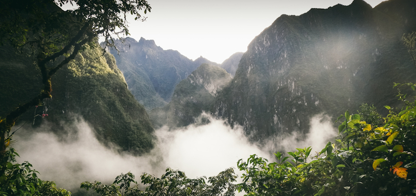 Why I Quit My Job After I Tried Ayahuasca In Peru